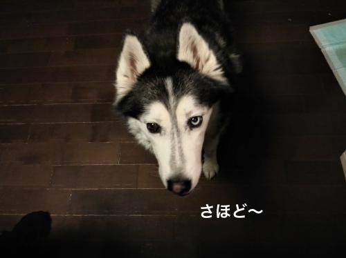 IMG_20180328_200146_Fotor.jpg
