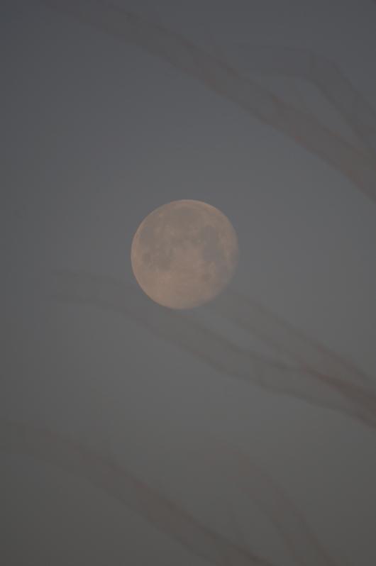 鳥居の向こうにはお月様