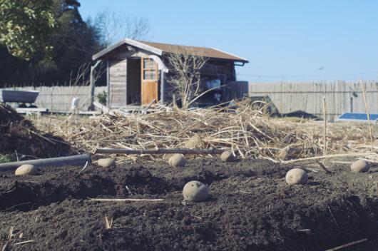 房総フィールドガーデン ジャガイモ畑
