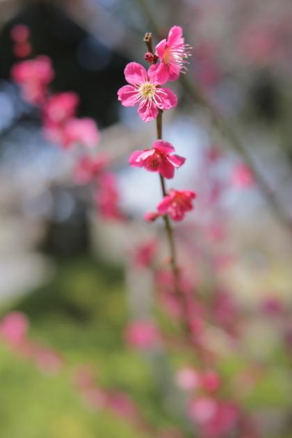 昭和記念公園 0313/2018