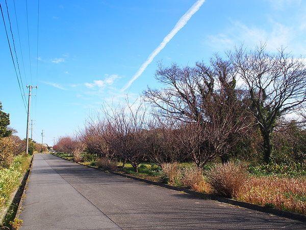 佐久島の道