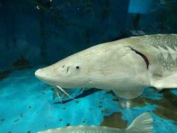 3/10 油壷マリンパーク水族館 サメ