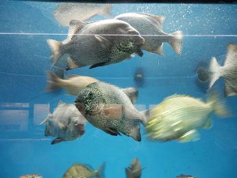 3/10 油壷マリンパーク水族館 魚いろいろ