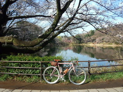 photo_derosa_sakura_gokinnjyo_0324_1_2018_0324.jpg
