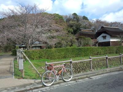 桜 ご近所ポタ