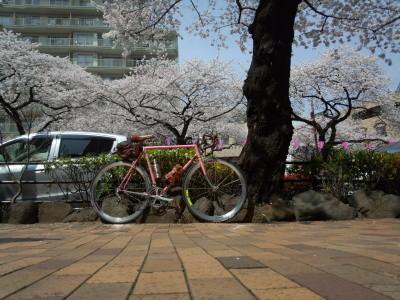 photo_derosa_tonainosakurameguri_2018_14_2018_0327.jpg