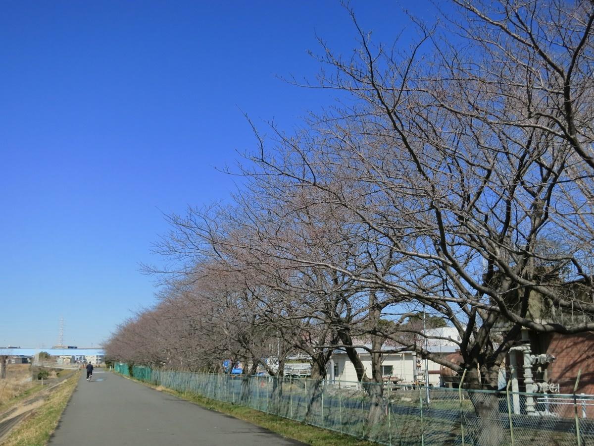 180301鶴見川-05