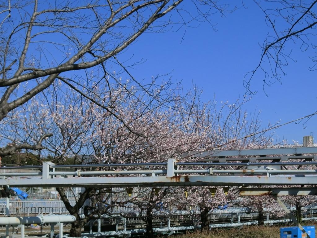 180301鶴見川-06