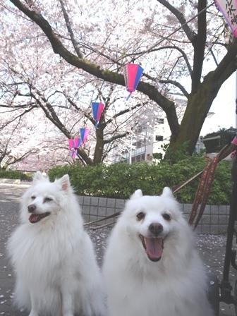 2018お花見5