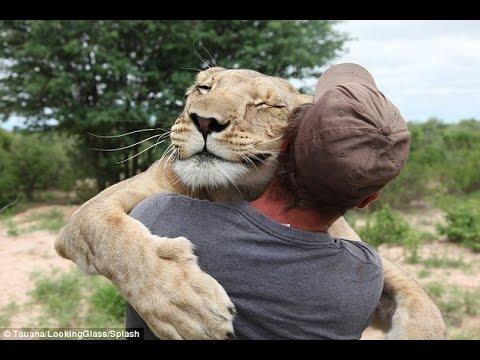 ライオンと人間