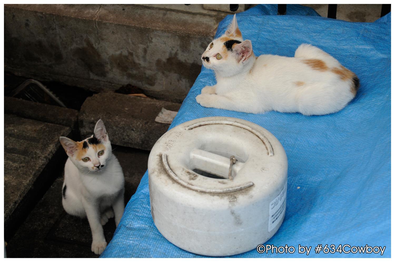 続 下町で撮影したネコ 写真