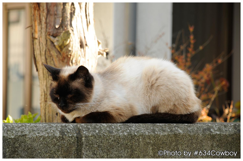 眠り猫 写真