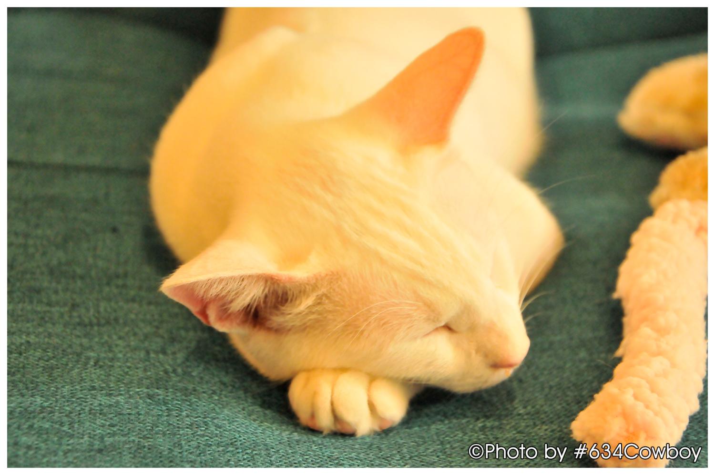 くつろぎながら眠る 写真