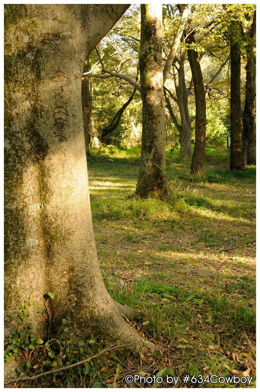 こもれびの木々 写真