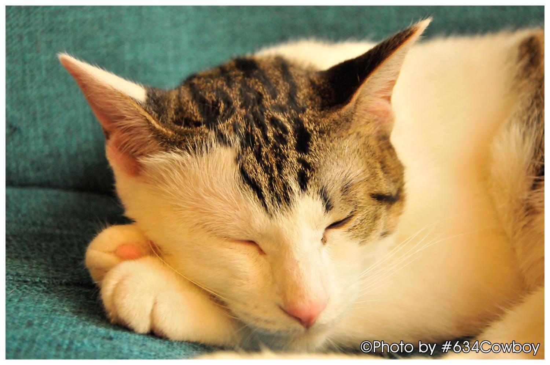 くつろぎながら眠る その2 写真