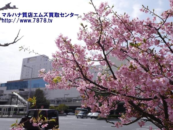 春の豊橋駅 豊橋ブランド品買取マルハナ質店