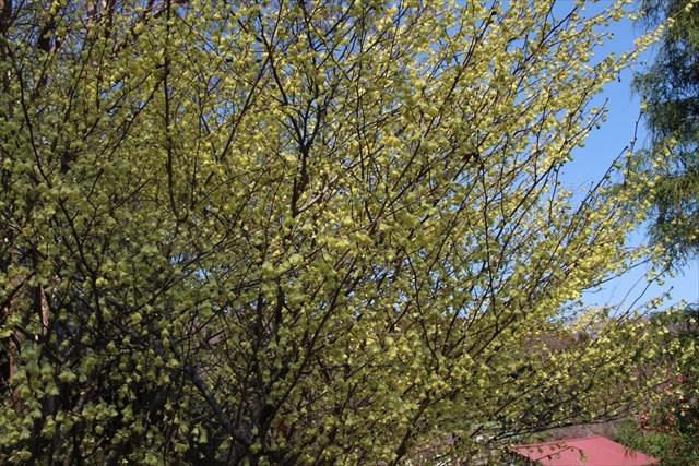 日向水木1