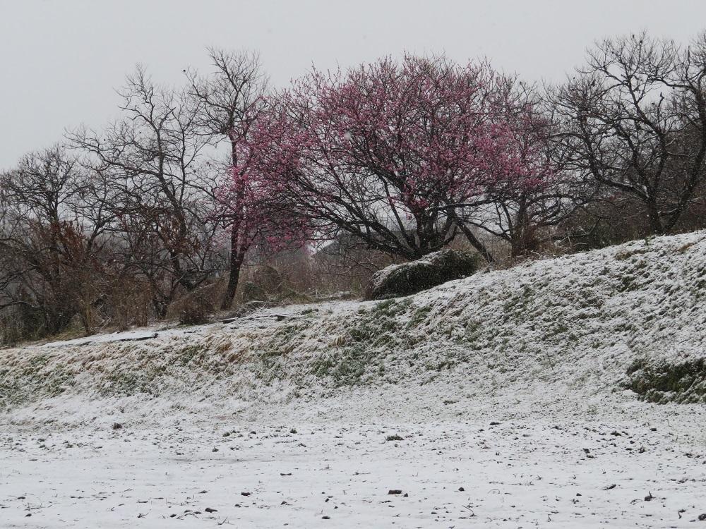 1雪3月21日IMG_4016