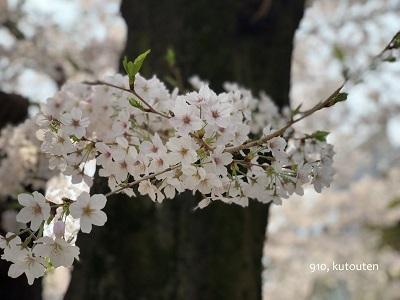 20180331-sakura-3-s.jpg
