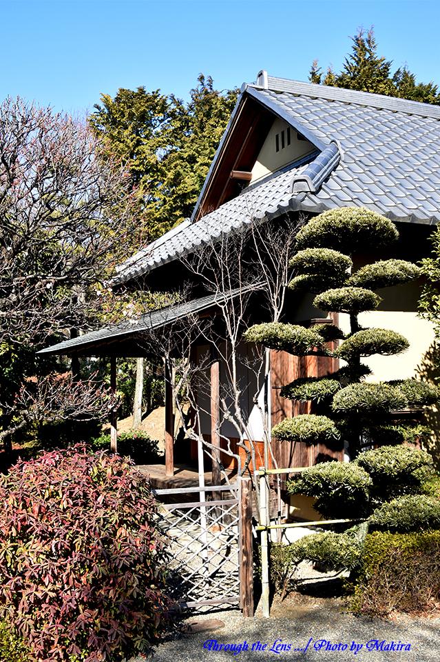 庭園56D9
