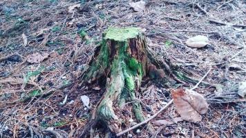 森の瞑想②