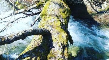 【 Zelkova Forest ケヤキの森 】②