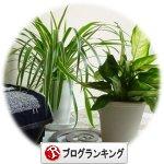 観葉植物 うずまき