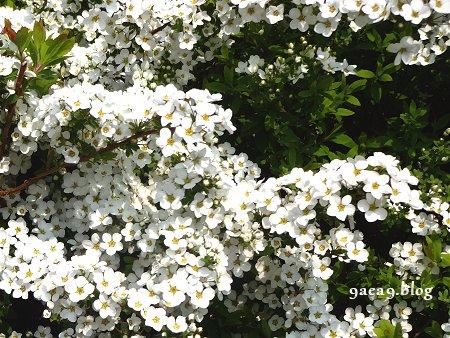 ただの山道の中の白い花 1