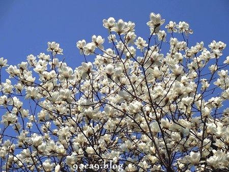 ただの山道の中の白い花 2