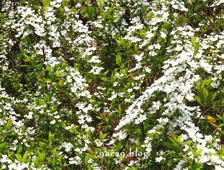 ただの山道の中の白い花 3