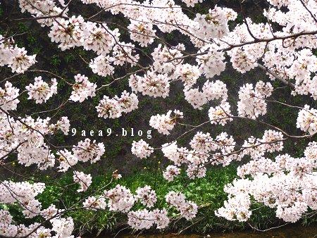 厳選 花見写真 4