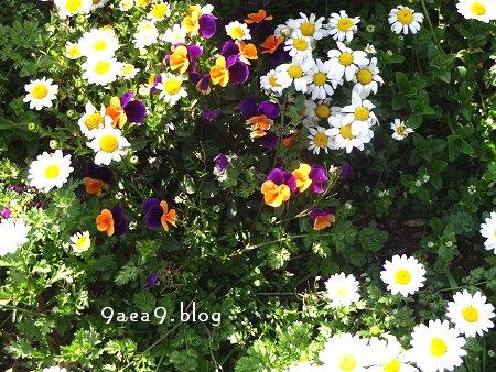 街路樹横 に飢えられた 花々 1