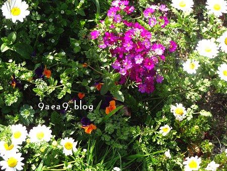 街路樹の真下 にうえられた 花々 2