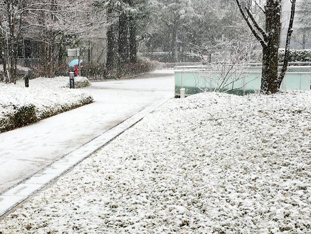 本降りの大雪!@東京2018年1月22日 by占いとか魔術とか所蔵画像