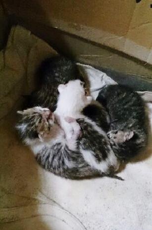 子猫2 (1)