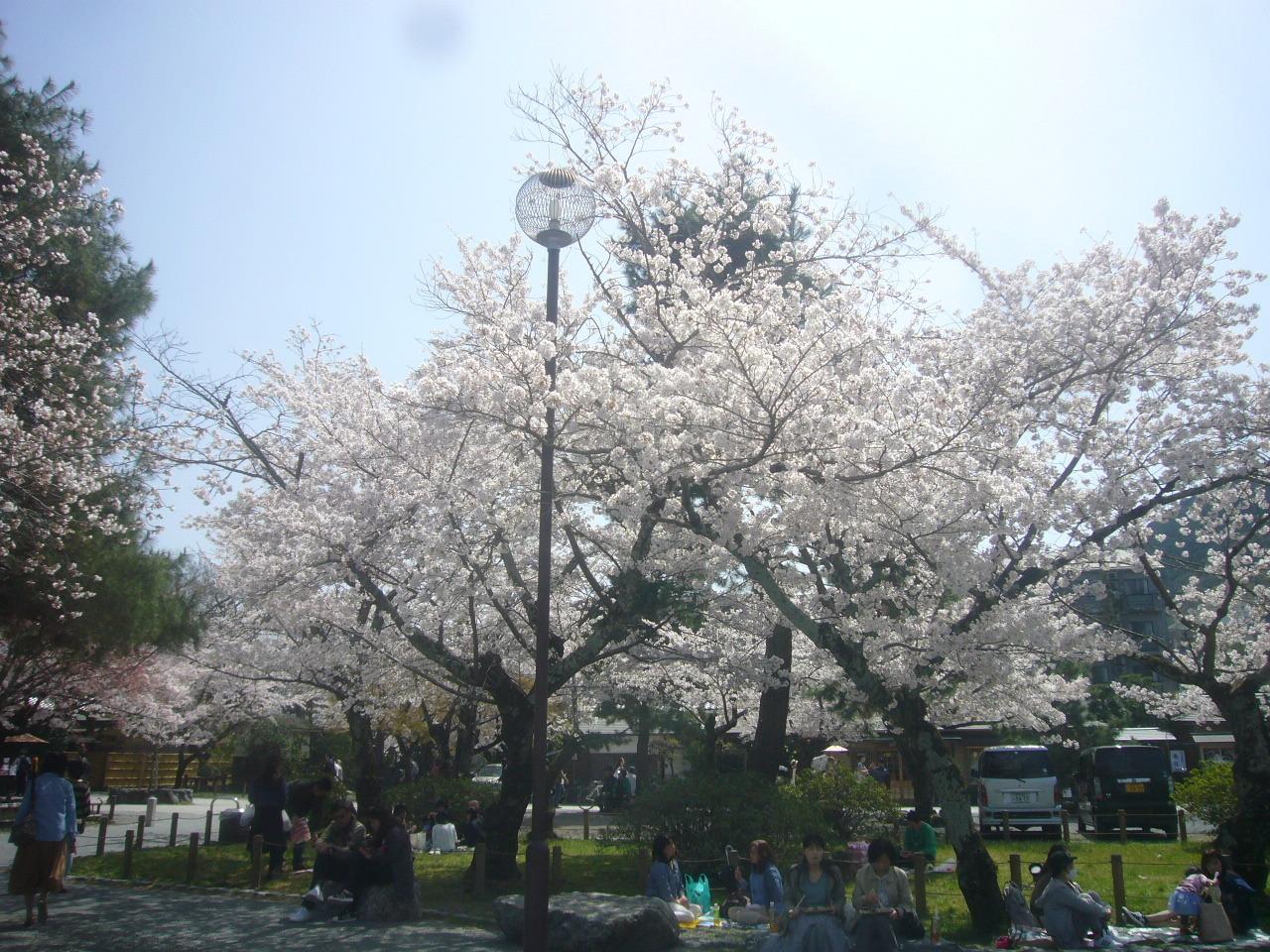 嵐山中之島の桜 H30.3.31