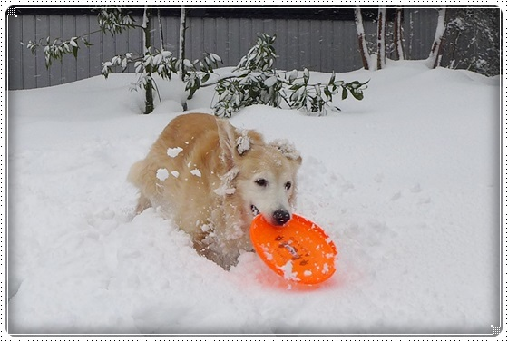2018,2,15雪3