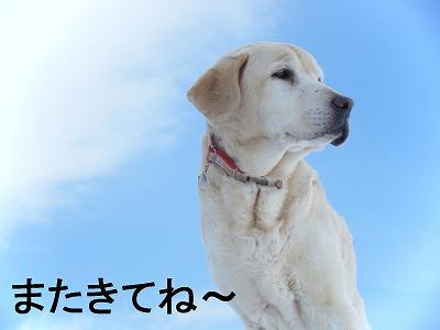16けん (2)