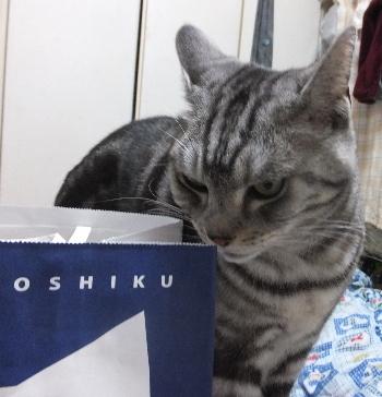 猫型パン1