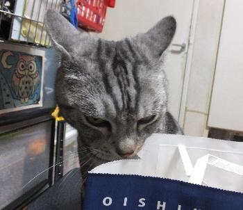 猫型パン2