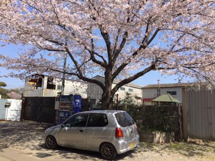 HA23 アルト 桜