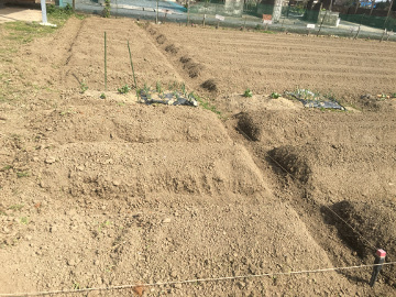 農園準備と人参の皮が2