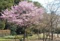 プリンセス雅(桜園)