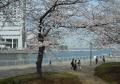 対岸正面はぷかりさん橋、左はヨコハマインターコンチネンタルホテル