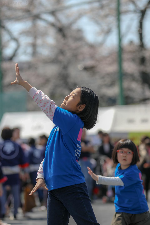 sk20180325sakura01-8.jpg