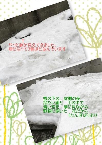 庭の雪 3月