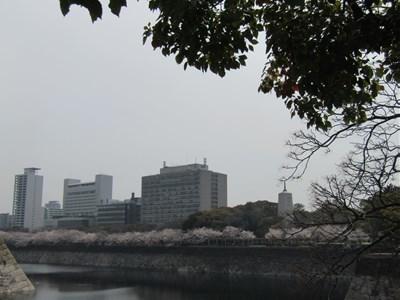 s-2018年大阪城桜①
