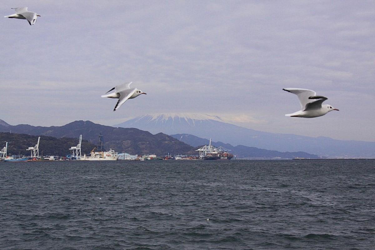 IMG_5659富士山とカモメ