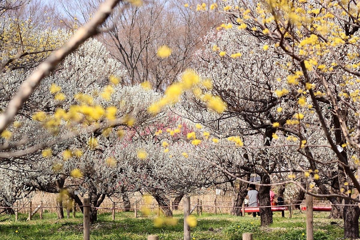 IMG_0926春景色〇