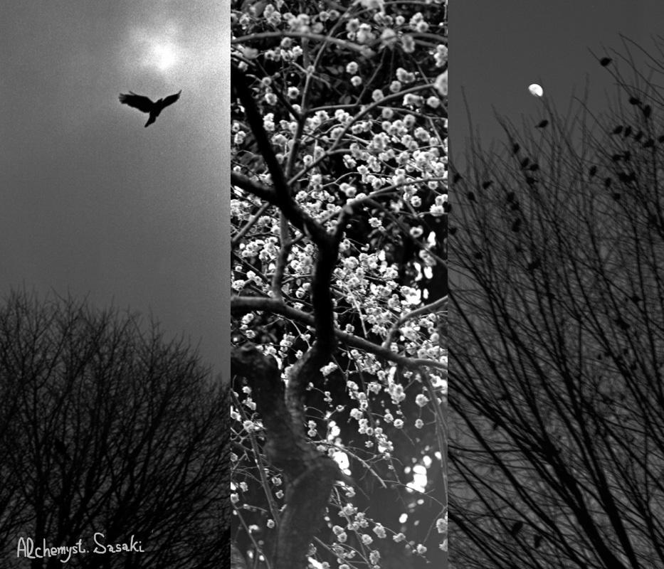 春の予感1058a64-6